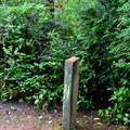 Numbered markers along the trail help you identify ecological and historical items.- Mike Miller Park