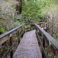 There are a few wooden foot bridges along the trail.- Mike Miller Park