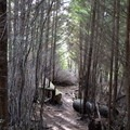 A steep section of trail carves through dense coastal forest.- Mike Miller Park