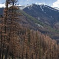 The dramatic red trees only last for a season or two after a wildfire.- Middle Fork of the Salmon River - Day 2