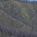 Scorched hillsides with green undergrowth in spring.- Middle Fork of the Salmon River - Day 2