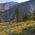 Blankets of color in mid-June in the Middle Canyon.- Middle Fork of the Salmon River - Day 2