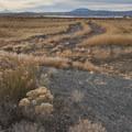 Lower Klamath National Wildlife Refuge. Mount Shasta (14,180') is on the horizon.- Klamath Basin National Wildlife Refuge Complex