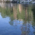 Ponderosa pine reflection at the pull-in to Marble Creek Camp.- Middle Fork of the Salmon River - Day 3