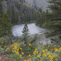 Arrowleaf balsamroot bloom along the river in early June.- Middle Fork of the Salmon River - Day 3