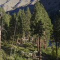 The ponderosa grove at Lower Jackass Camp.- Middle Fork of the Salmon River - Day 3