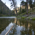 Ponderosa pine reflection.- Middle Fork of the Salmon River - Day 3