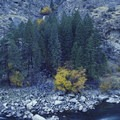 Golden Creek Falls is barely visible above Redside Rapid.- Middle Fork of the Salmon River - Day 5