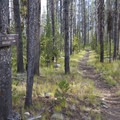 Long stretches of the initial hike pass through the dense lodgepole pine.- Middle Fork of the Salmon River Trail – Day 1