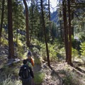 Hiking across small benches dotted with ponderosa pines is par for the course in Pungo Canyon.- Middle Fork of the Salmon River Trail – Day 3