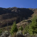 The Mortar Creek Fire (1979) burned the hillsides downstream of Jackass Camp. The forests have yet to fully recover.- Middle Fork of the Salmon River Trail – Day 4