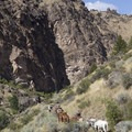 A string of horses shares the trail.- Middle Fork of the Salmon River Trail – Day 5