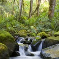 There is no shortage of green and moss-covered boulders along the tributaries.- Rogue River: Grave Creek to Foster Bar