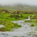 The hike can be very wet after the rains.- Lynch Canyon Open Space
