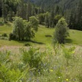 A rare open meadow above the appropriately named Meadow Creek.- Rogue River Trail - Day 1