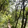 Lush Rogue River Trail hiking.- Rogue River Trail – Day 3
