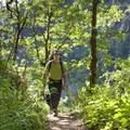 Beautiful greenery along the trail.- Rogue River Trail – Day 3