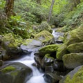 Many creeks cascade through mossy boulders along the trial.- Rogue River Trail – Day 4