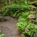 The lush understory along the trail to Heather Lake.- Heather Lake