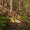 The trail to Heather Lake.- Heather Lake