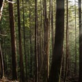 Sunlight pours through the trees in the Mount Baker-Snoqualmie National Forest.- Heather Lake
