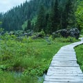 A boardwalk leads around Heather Lake for better views over the marshy wetlands.- Heather Lake
