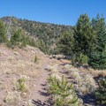 The start of the trail runs along an old forest road that is no longer in use.- Strawberry Mountain via Roads End Trail