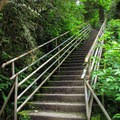 Stairs leading down to the viewing area.- Granite Falls Fish Ladder