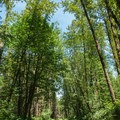 The walk is about a mile on the gravel portion of the road used for logging.- Explorer Falls