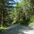 The gravel logging road leads to the trail to Explorer Falls.- Explorer Falls