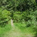 Watch for this trail leaving the road after approximately a mile from the gate.- Explorer Falls