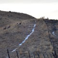 Fence line and mule deer.- East Moraine, Wallowa Lake