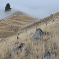 Observing, or being observed by, mule deer along the ridge from the East Moraine Trail.- East Moraine, Wallowa Lake