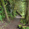 The early section of the trail is an old logging route.- Boulder River Trail