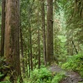 The trail proceeds through a healthy and protected Boulder River Wilderness.- Boulder River Trail
