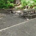 The designated campsites have elevated tent pads, which is a nice feature in such a rainy area.- Esswine Group Campground