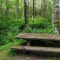 Picnic tables at Esswine Group Campground.- Esswine Group Campground