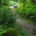 A path to one of the more secluded sites within the group campground.- Boardman Creek Group Campground