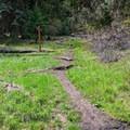 Start of the Green Springs Loop Trail.- Green Springs Loop