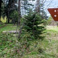 Follow the signs for the loop trail.- Green Springs Loop