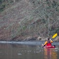 The calm waters of the river allow kayakers to paddle upstream fairly easily.- Sammamish River Kayak/Canoe