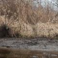 A wagon wheel along the banks of the Sammamish River.- Sammamish River Kayak/Canoe