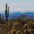 The views of the surrounding desert and the Castle Dome mountains are spectacular, as are the many saguaro and cholla cacti.- Castle Dome Mines Museum and Ghost Town