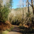 The road back to the car offers pleasant, easy walking.- Golden + Silver Falls