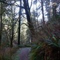 Thick vegetation lining the trail keeps much of the hike in darkness.- Golden + Silver Falls