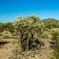 The desert scenery from the Twin Peaks Campground is amazing!- Twin Peaks Campground