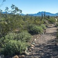 The Palo Verde Trail leads to the visitor center and also allows dogs.- Twin Peaks Campground
