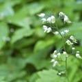 Unidentified species (help us identify it by providing feedback).- Yocum Ridge
