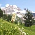 Wildflowers on the path toward Yocum Ridge- Yocum Ridge