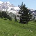 Wildflower-lined trail leading to Yocum Ridge.- Yocum Ridge